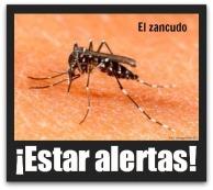 3 - 1 mosco del dengue