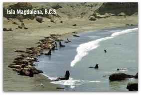 z - isla magdalena 006