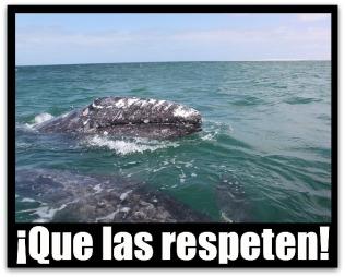3 - 1 ballenas