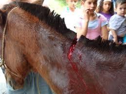 2 - 1 caballo herido