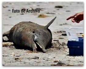 2 - 1 avisan de delfines muertos foto de archivo