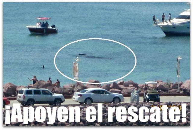 2 - 1 ballena costa baja