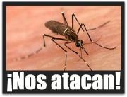 2 - 1 el dengue mosco zancudo 04