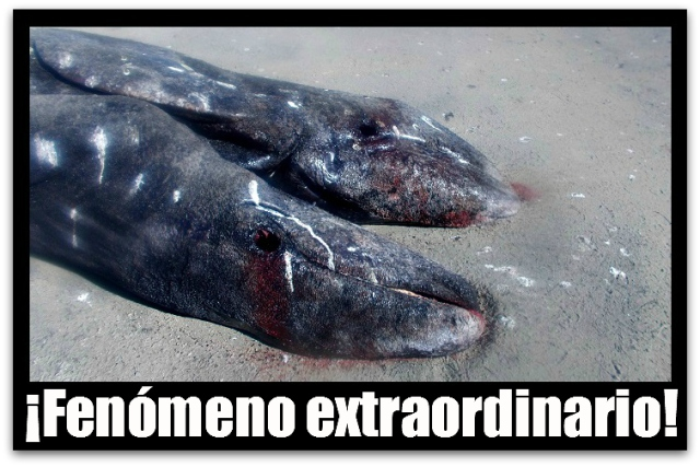 2 - 1 ballena siames baja california sur