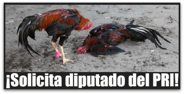 2 - 1 peleas de gallos