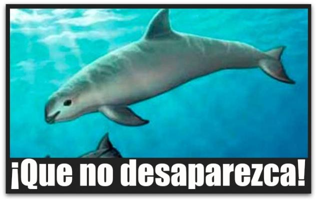 1 a vaquita marina uabcs
