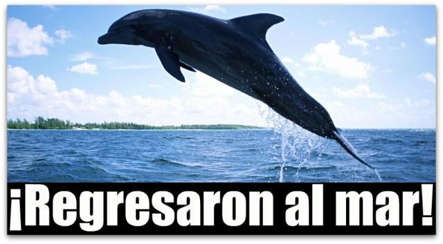 0 a delfines varados la paz bcs