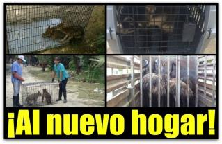 0 a zoologico de santiago animales profepa