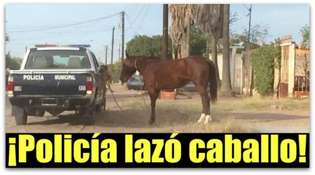 0 a a ciudad constitucion bcs caballo lazado