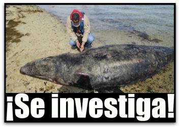 0 a ballenas muertas en guerrero negro ojo de liebre