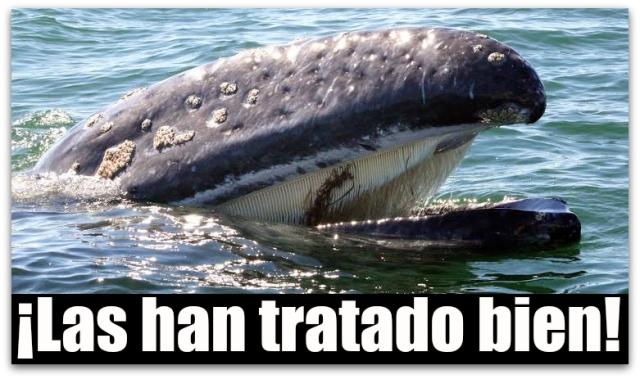 0 a ballenas en baja california sur