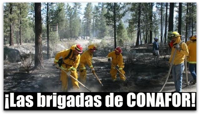 0 a incendios brigadas conafor