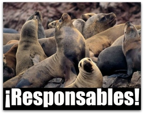 0 a lobos marinos baja california sur