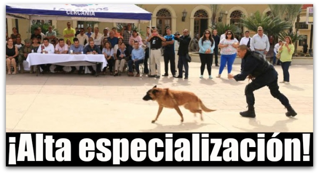 0 a unidad canina de policia de los cabos