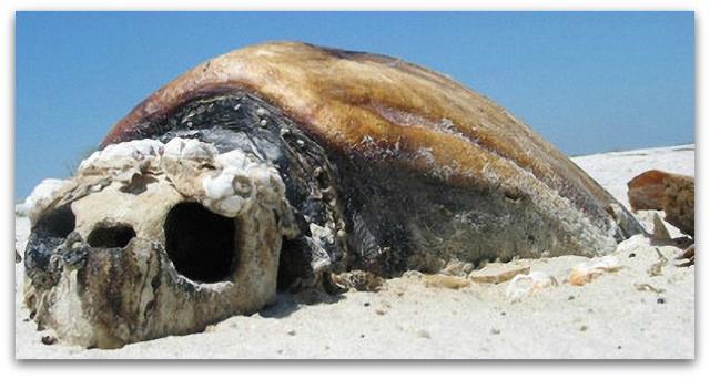 0 a tortuga muerta