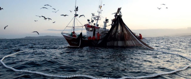 0-a-pesca-ilegal-baja-california-sur