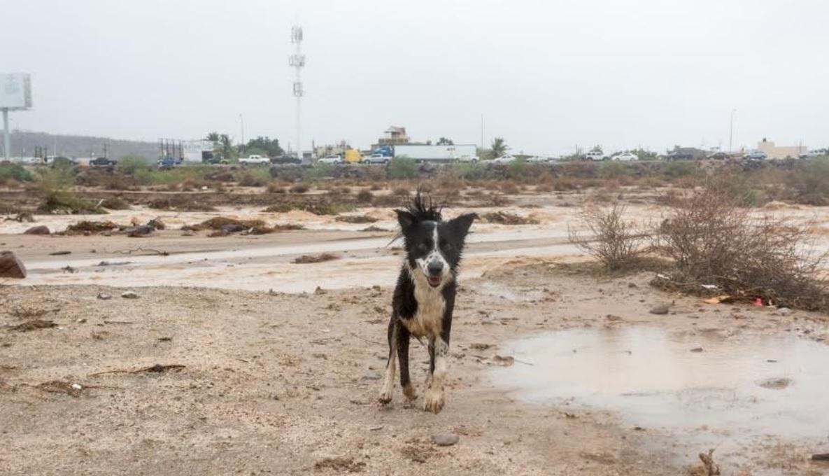 IMPORTANTE: Para todos los propietarios de mascotas en La Paz – Colectivo  Pericú